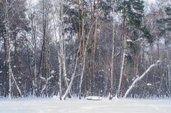 冬天树森林墙壁与积雪的分支的 库存照片