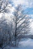 冬天树照片在雪的 免版税库存照片