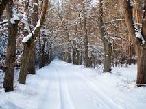 冬天树被排行的车道 库存图片