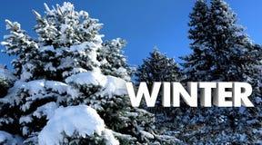 冬天树雪冷的自然场面词 向量例证