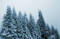 冬天树,在云杉的雪 免版税库存照片