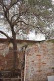冬天树1月 库存图片