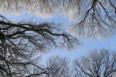 冬天树 库存照片