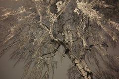 冬天树 免版税库存图片