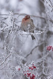 冬天栖息处II 图库摄影