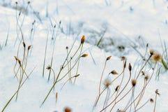 冬天样式-黄色花 免版税库存图片