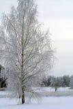 冬天桦树和湖 库存图片