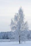 冬天桦树和湖 库存照片
