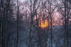 冬天桦树 免版税库存图片