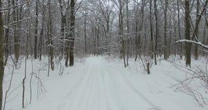 冬天森林Ð  erial视图在积雪的树中的冬日 股票录像