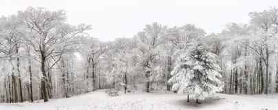 冬天森林全景有树的包括雪 免版税库存照片