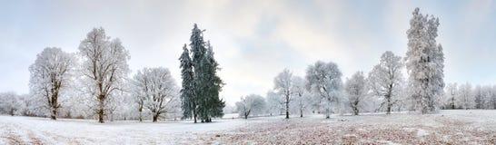 冬天森林全景有树的包括雪 库存照片
