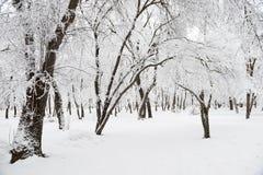 冬天森林公园雪天气风暴 免版税图库摄影