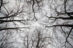 冬天森林公园黑色分支 库存图片