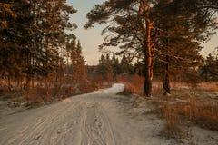 冬天森林公路和太阳 库存图片
