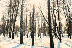 冬天森林冬天风景 图库摄影