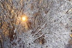 冬天森林和太阳 图库摄影