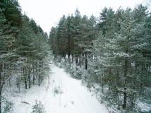 冬天森林和路 在视图之上 照片拍了与寄生虫 杉木和云杉的森林有一条路的在雪 免版税图库摄影