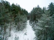 冬天森林和路 在视图之上 照片拍了与寄生虫 杉木和云杉的森林有一条路的在雪 图库摄影