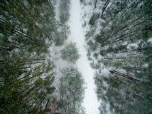 冬天森林和路 在视图之上 照片拍了与寄生虫 杉木和云杉的森林有一条路的在雪 库存图片