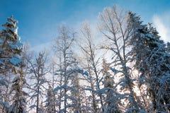 冬天森林在一个晴天 库存照片