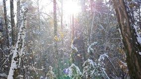 冬天森林在一个晴天 股票录像