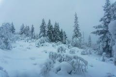 冬天森林在北芬兰 图库摄影