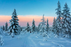 冬天森林在北芬兰 库存照片