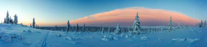 冬天森林在北芬兰 免版税库存图片