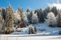冬天森林在喀尔巴汗 免版税图库摄影