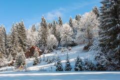 冬天森林在喀尔巴汗 免版税库存照片