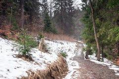 冬天森林在喀尔巴汗 免版税库存图片