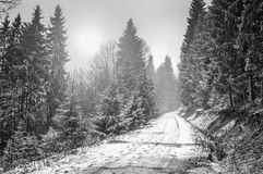 冬天森林在喀尔巴汗 库存照片