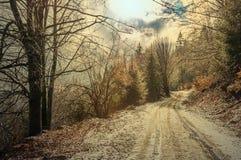 冬天森林在喀尔巴汗 图库摄影