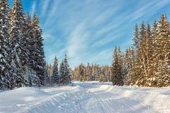 冬天森林在晴天 免版税库存照片