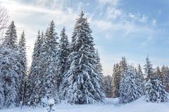 冬天森林在晴天 库存照片