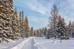 冬天森林在晴天 免版税图库摄影