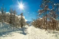 冬天森林在沃热尔天空中心附近的阿尔卑斯在斯洛文尼亚 免版税库存照片