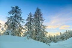 冬天森林在沃热尔天空中心附近的阿尔卑斯在斯洛文尼亚 免版税库存图片