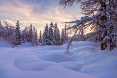 冬天森林在沃热尔天空中心附近的阿尔卑斯在斯洛文尼亚 库存图片