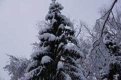 冬天森林在沃洛格达州 库存照片