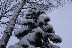 冬天森林在沃洛格达州 免版税库存照片