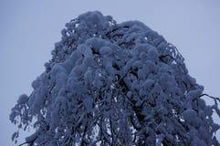 冬天森林在沃洛格达州 库存图片