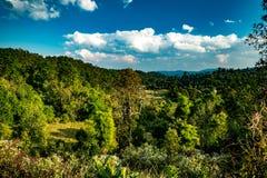 冬天森林在泰国 库存图片