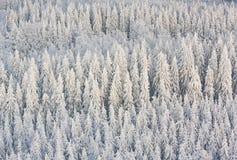 冬天森林在芬兰 免版税库存图片