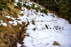冬天森林在阿尔卑斯 库存图片