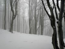 冬天森林在Bieszczady,波兰 库存照片