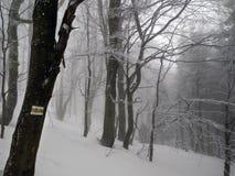 冬天森林在Bieszczady,波兰 免版税库存照片