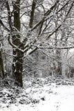 冬天森林地树雪风景  库存照片
