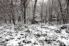 冬天森林地树雪风景  图库摄影